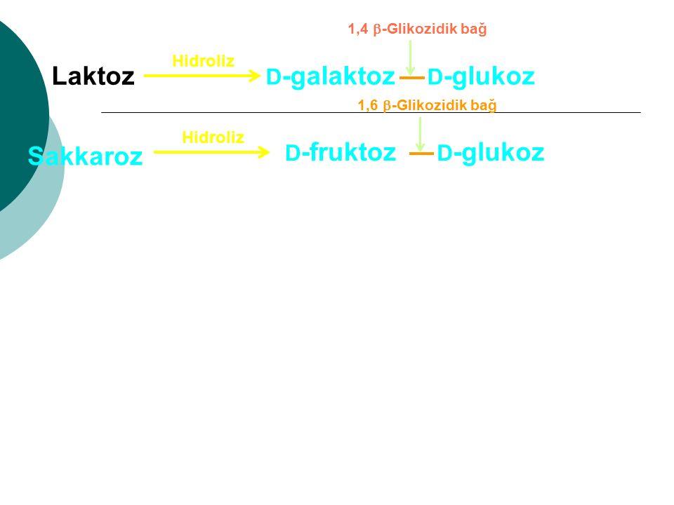 Laktoz Sakkaroz D-galaktoz D-glukoz D-fruktoz D-glukoz Hidroliz