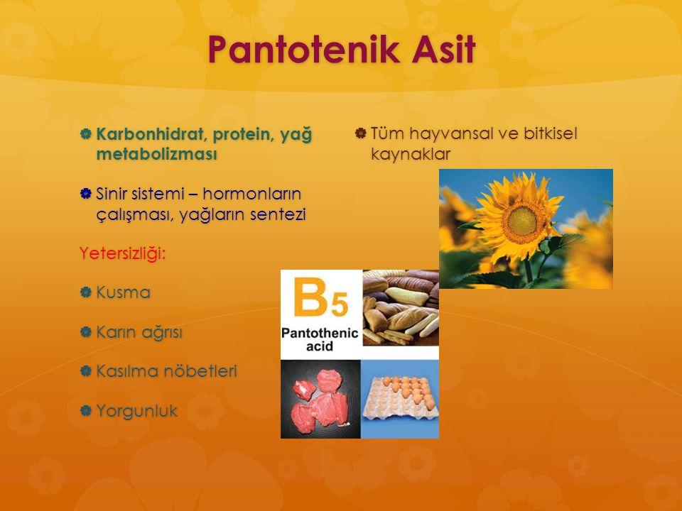 Pantotenik Asit Karbonhidrat, protein, yağ metabolizması