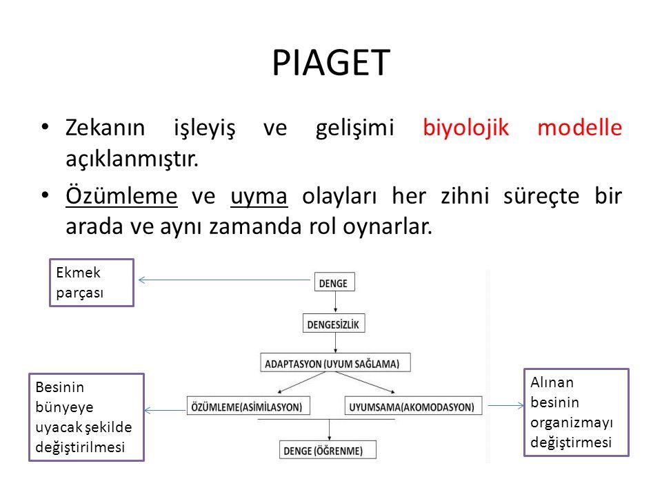 PIAGET Zekanın işleyiş ve gelişimi biyolojik modelle açıklanmıştır.