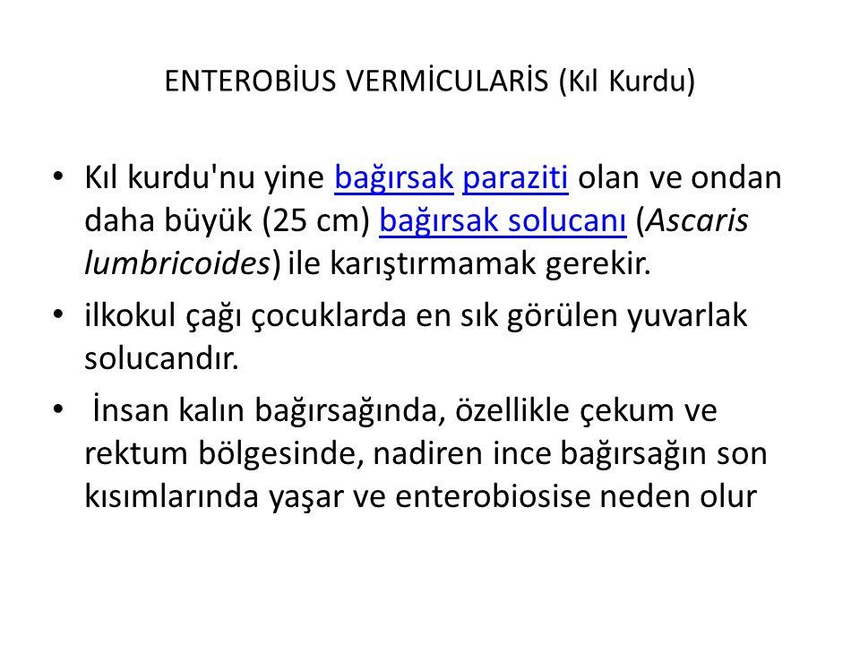 ENTEROBİUS VERMİCULARİS (Kıl Kurdu)