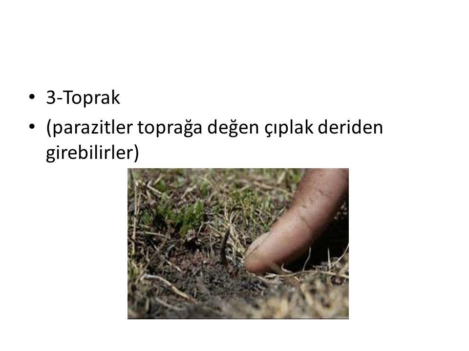 3-Toprak (parazitler toprağa değen çıplak deriden girebilirler)
