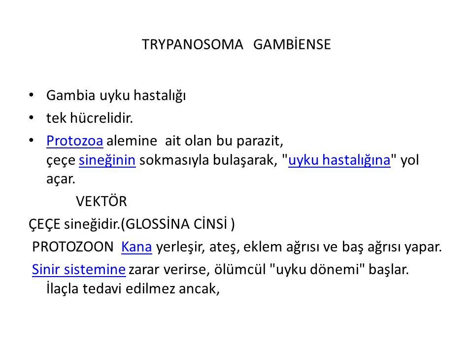 TRYPANOSOMA GAMBİENSE