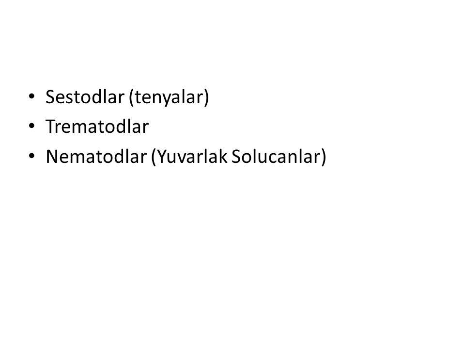 Sestodlar (tenyalar) Trematodlar Nematodlar (Yuvarlak Solucanlar)
