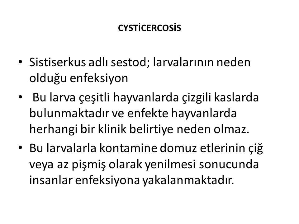 Sistiserkus adlı sestod; larvalarının neden olduğu enfeksiyon