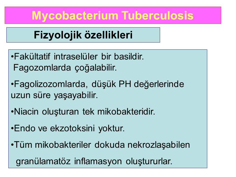 Mycobacterium Tuberculosis Fizyolojik özellikleri