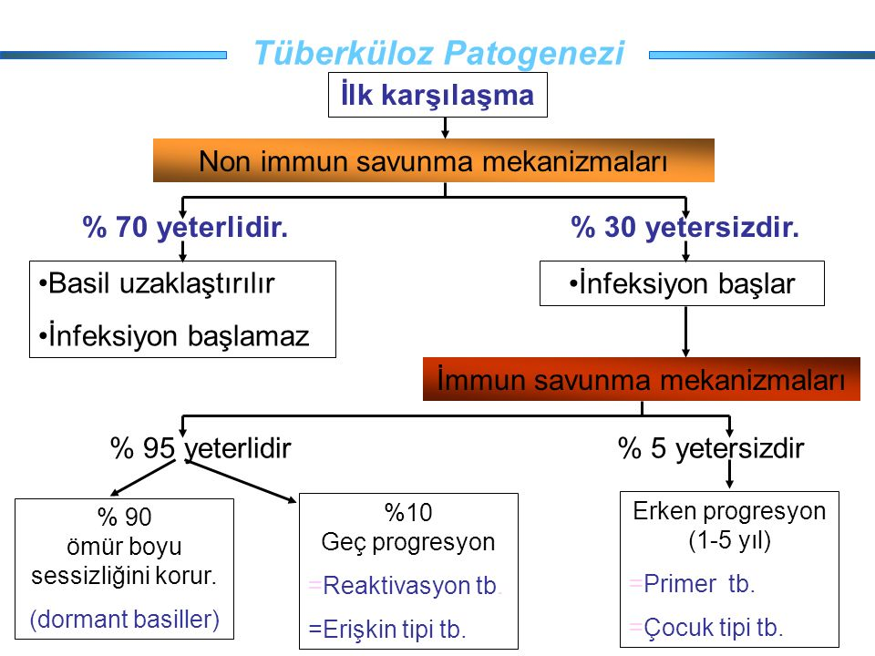Tüberküloz Patogenezi