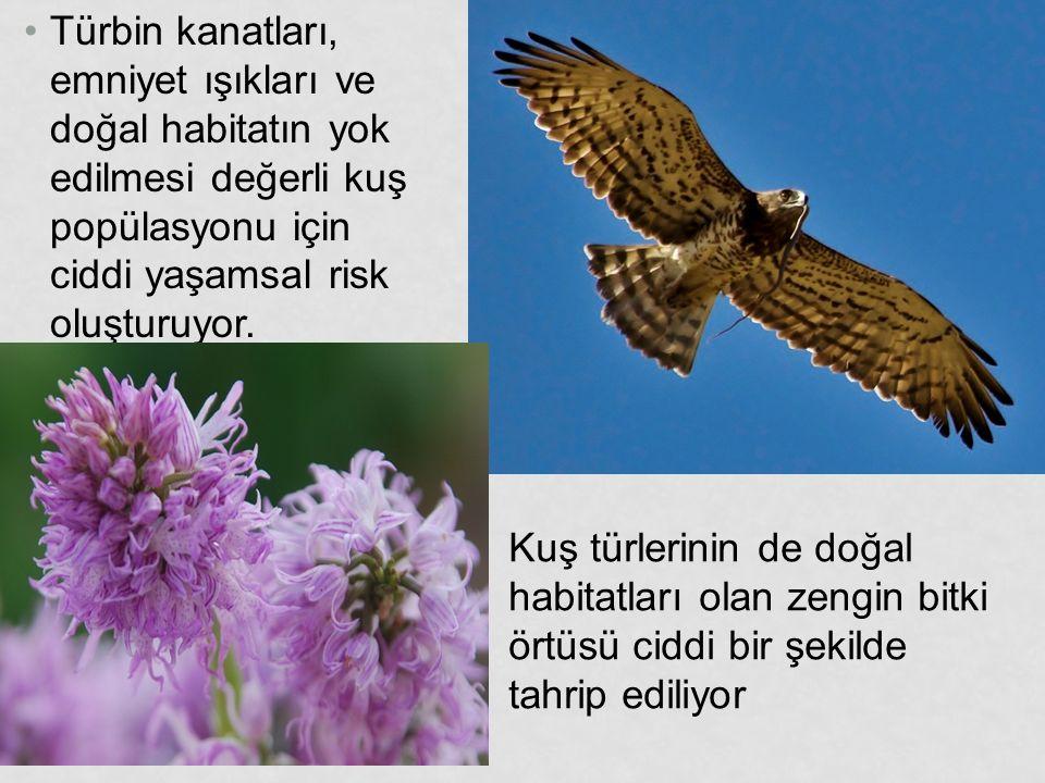 Türbin kanatları, emniyet ışıkları ve doğal habitatın yok edilmesi değerli kuş popülasyonu için ciddi yaşamsal risk oluşturuyor.