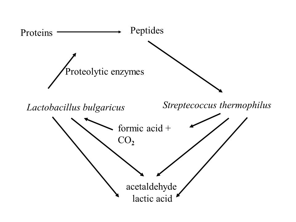 Peptides Proteins. Proteolytic enzymes. Streptecoccus thermophilus. Lactobacillus bulgaricus. formic acid + CO2.