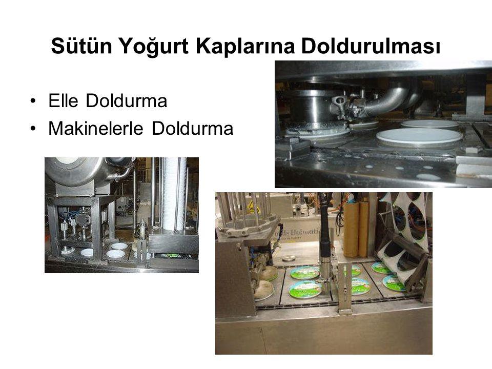 Sütün Yoğurt Kaplarına Doldurulması