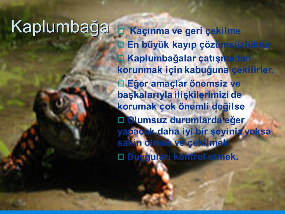 Kaplumbağa Kaçınma ve geri çekilme En büyük kayıp çözümsüzlüktür