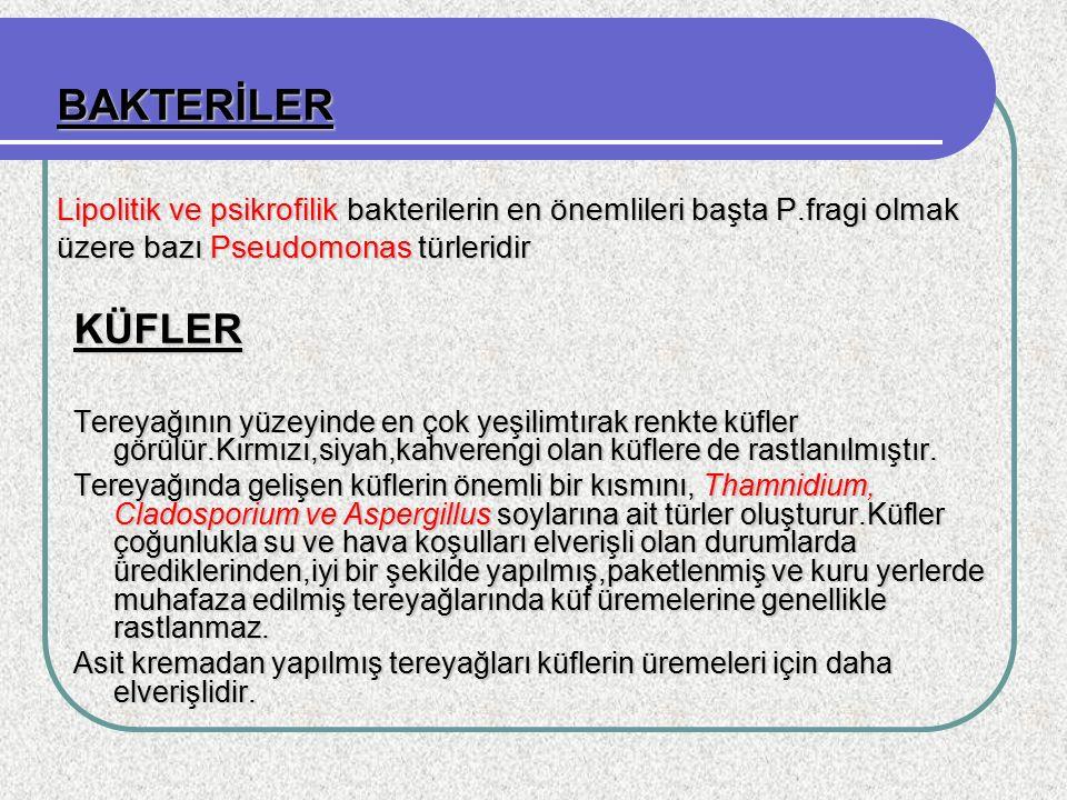 BAKTERİLER Lipolitik ve psikrofilik bakterilerin en önemlileri başta P