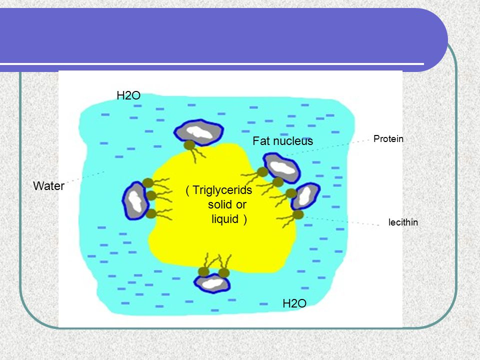H2O Fat nucleus Water ( Triglycerids solid or liquid ) H2O Protein