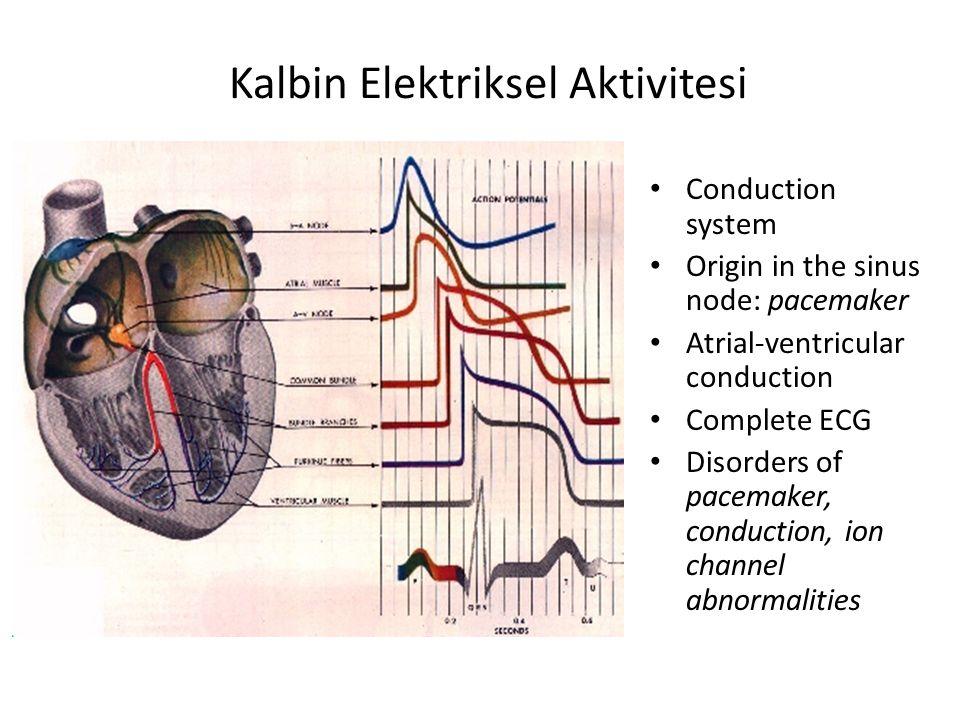 Kalbin Elektriksel Aktivitesi