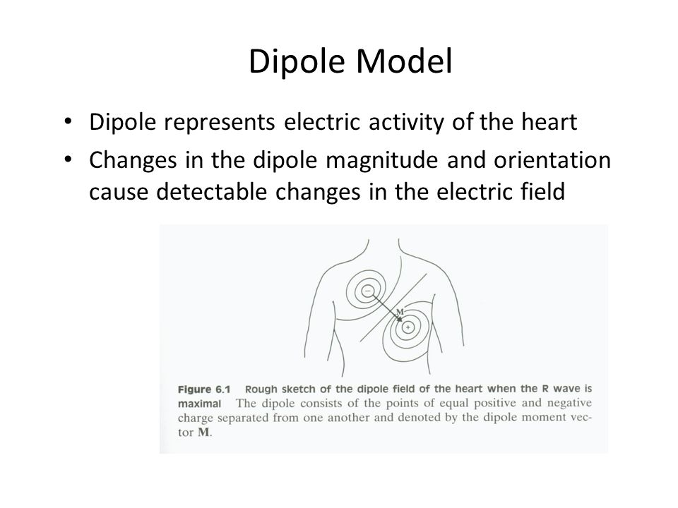 Dipole Model Dipole represents electric activity of the heart