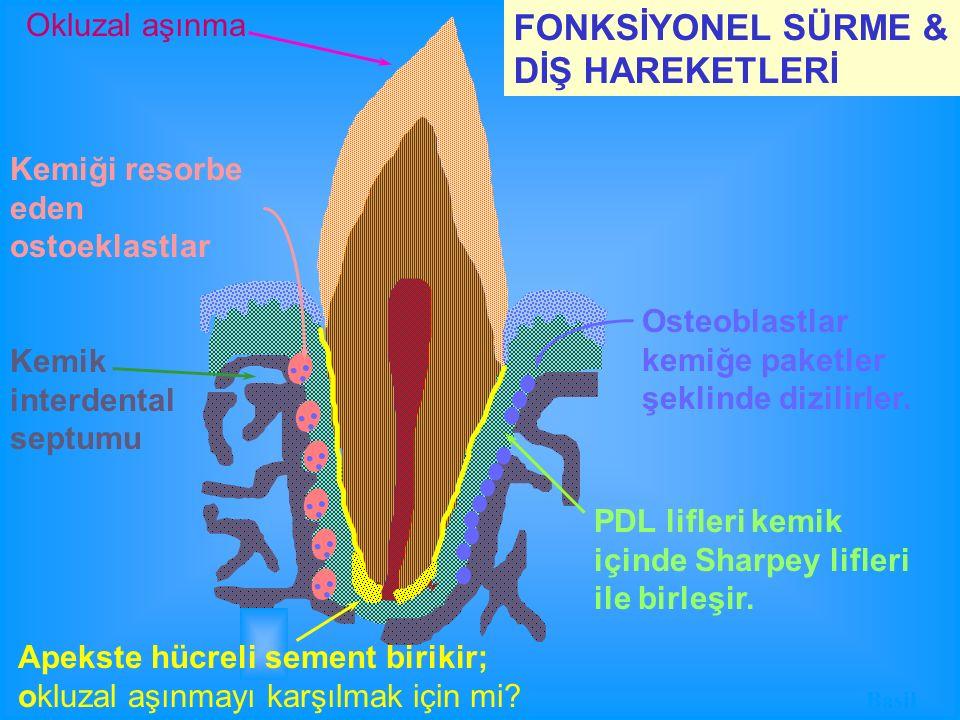 FONKSİYONEL SÜRME & DİŞ HAREKETLERİ