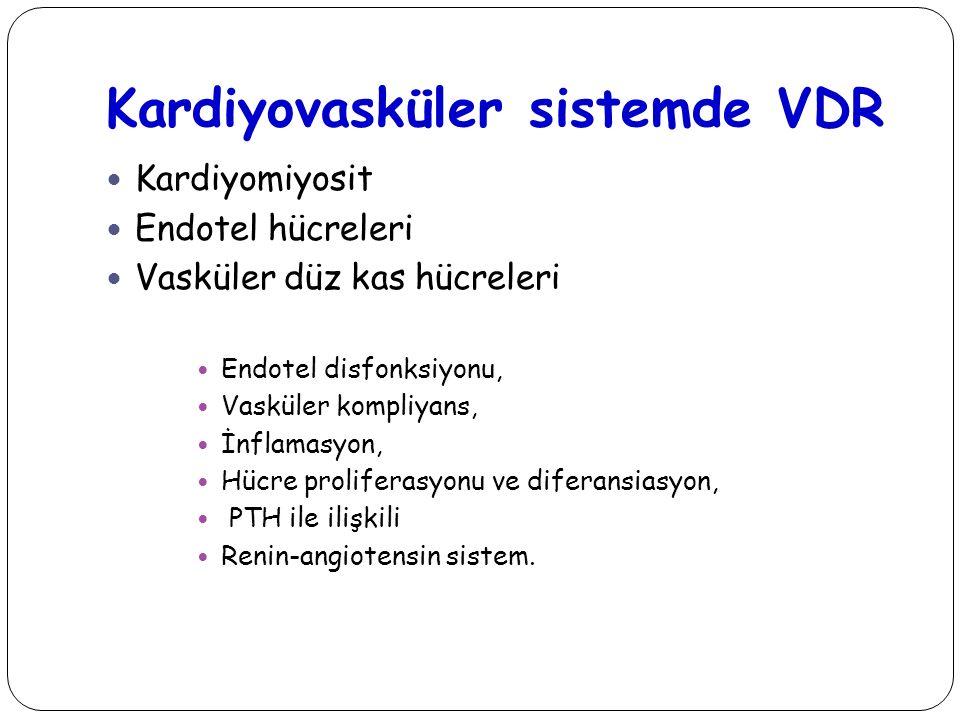 Kardiyovasküler sistemde VDR