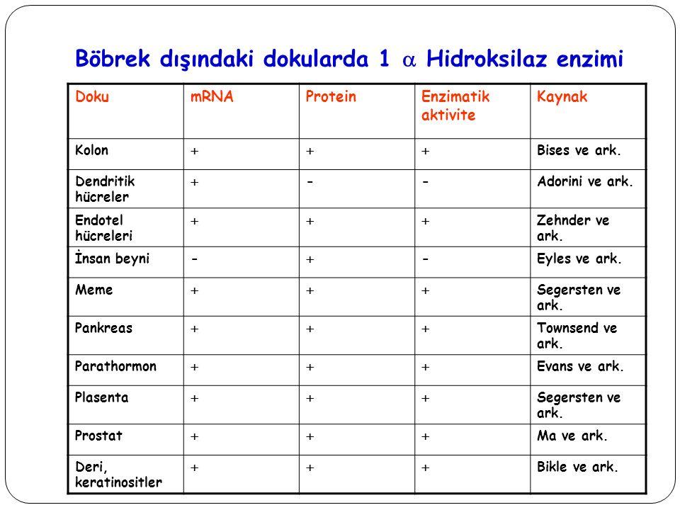 Böbrek dışındaki dokularda 1  Hidroksilaz enzimi