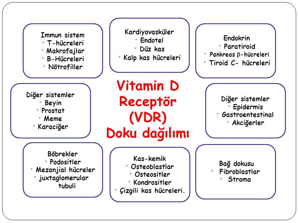 Vitamin D Receptör (VDR)