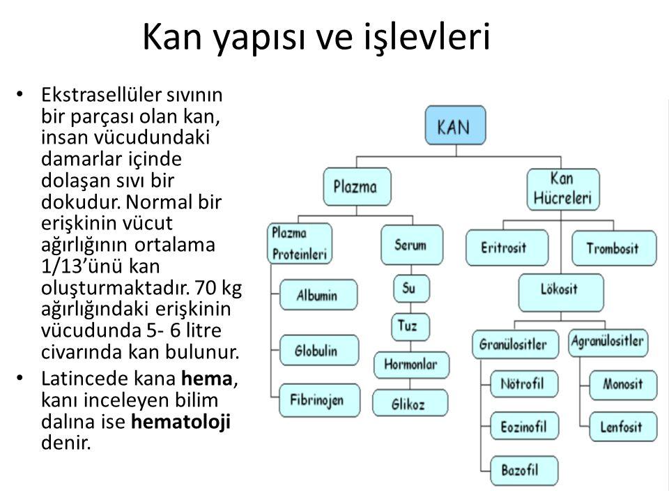 Kan yapısı ve işlevleri