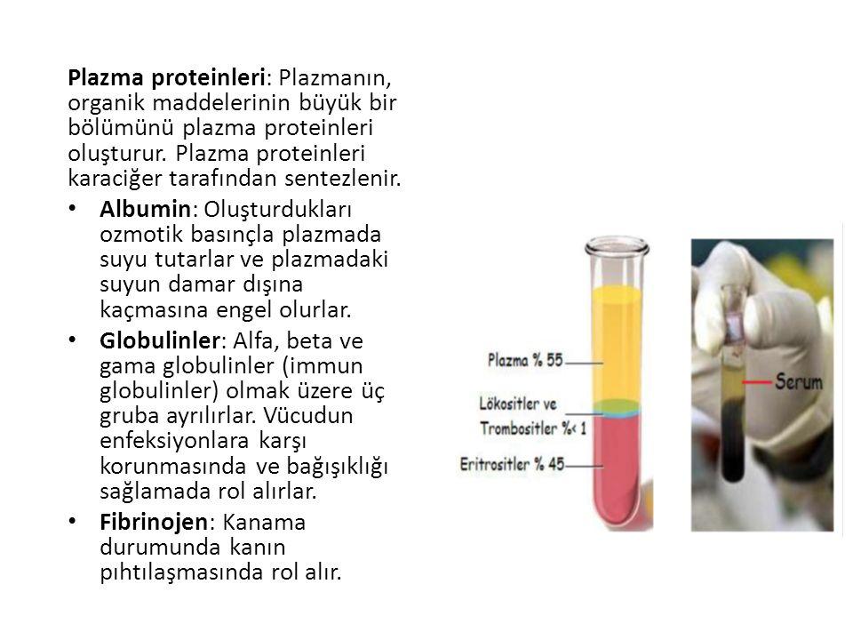 Plazma proteinleri: Plazmanın, organik maddelerinin büyük bir bölümünü plazma proteinleri oluşturur. Plazma proteinleri karaciğer tarafından sentezlenir.