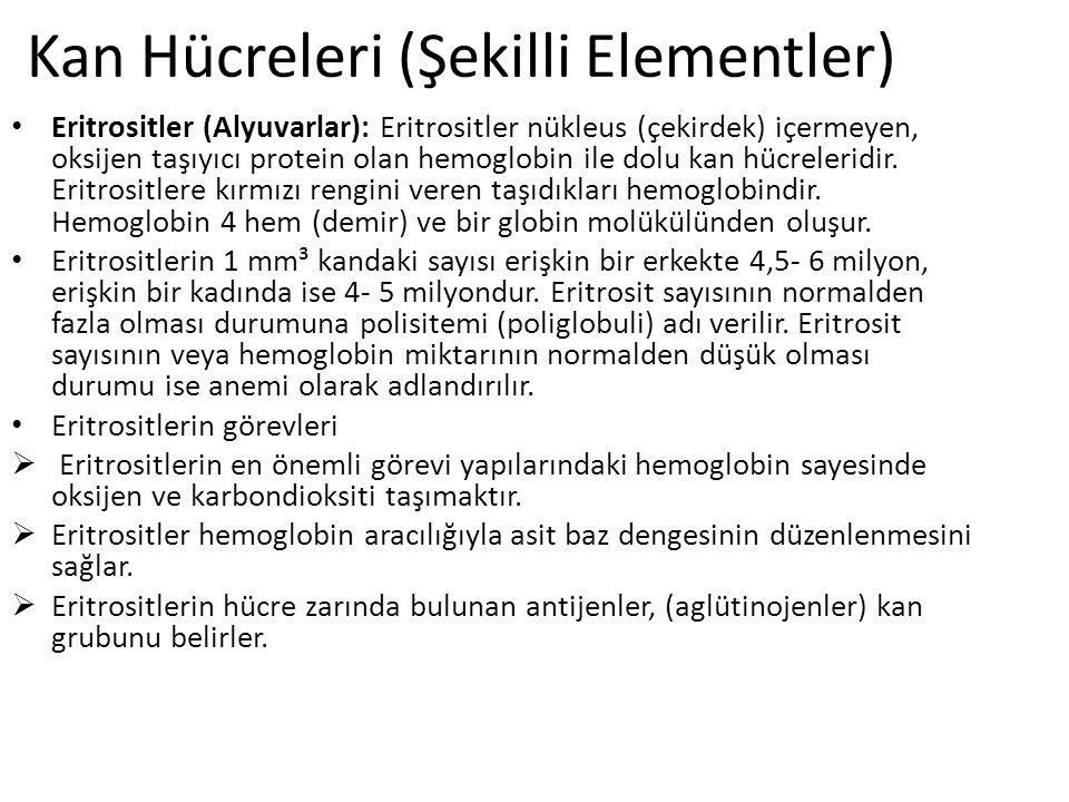 Kan Hücreleri (Şekilli Elementler)
