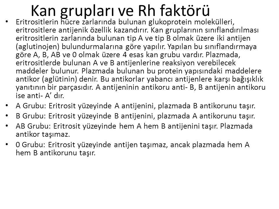Kan grupları ve Rh faktörü