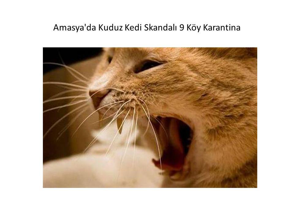 Amasya da Kuduz Kedi Skandalı 9 Köy Karantina