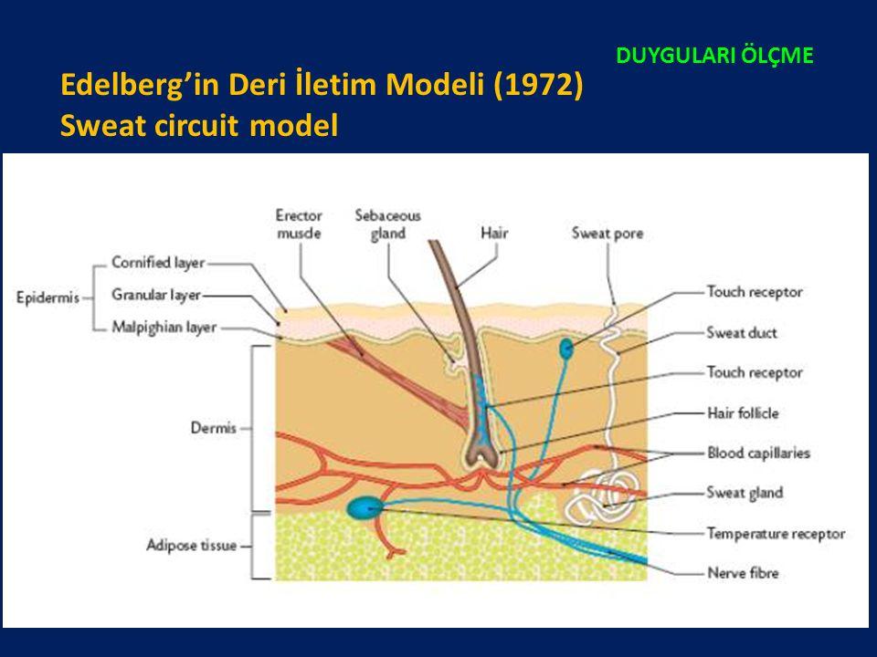 Edelberg'in Deri İletim Modeli (1972) Sweat circuit model