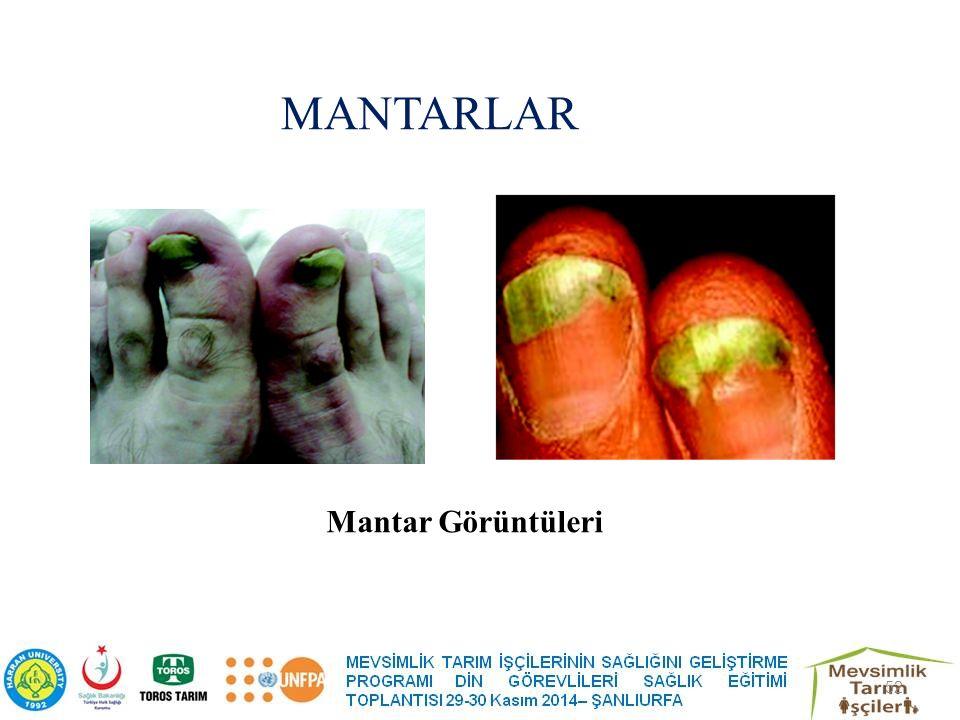 MANTARLAR Mantar Görüntüleri