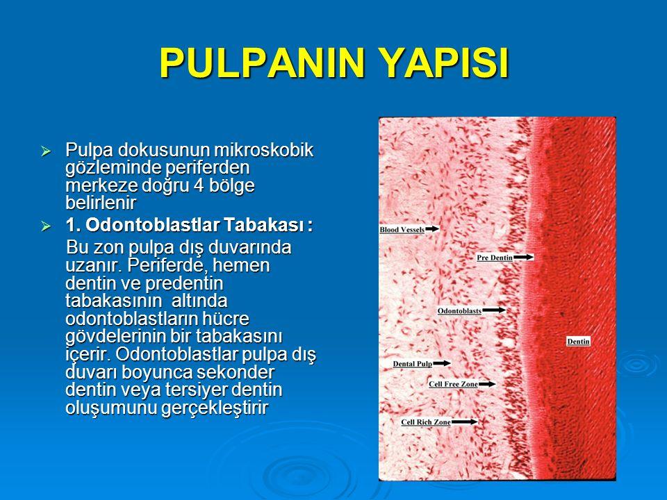 PULPANIN YAPISI Pulpa dokusunun mikroskobik gözleminde periferden merkeze doğru 4 bölge belirlenir.