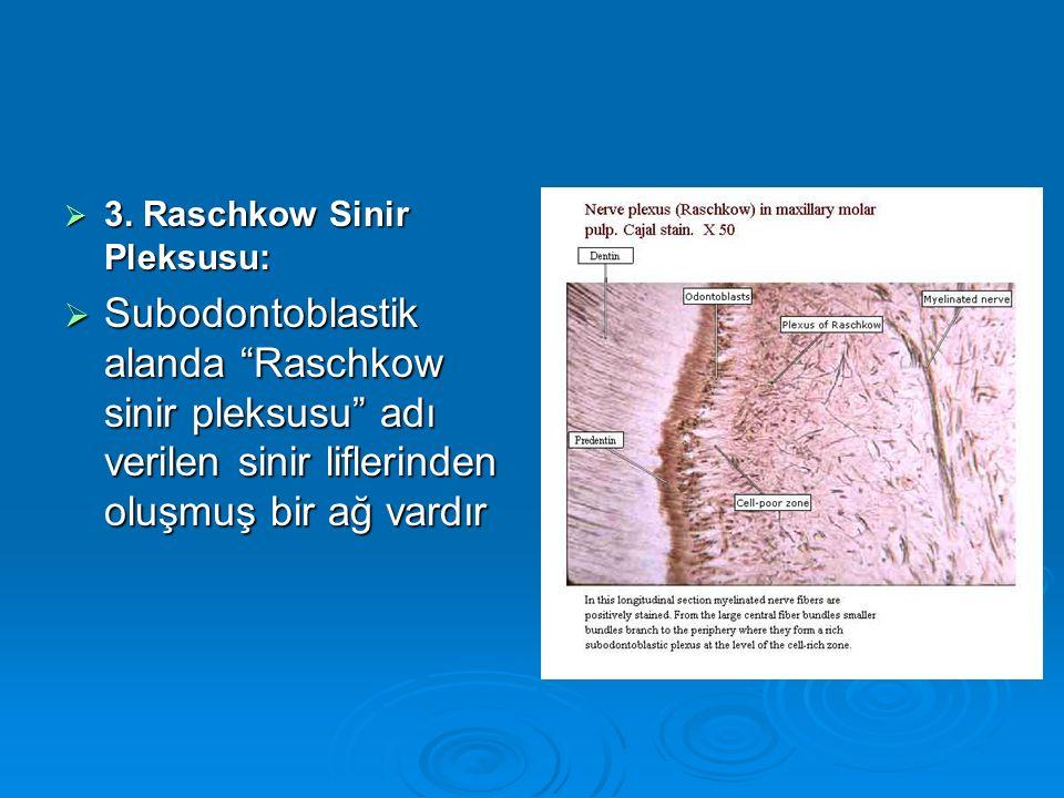 3. Raschkow Sinir Pleksusu: