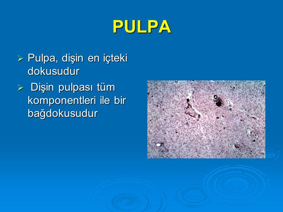 PULPA Pulpa, dişin en içteki dokusudur
