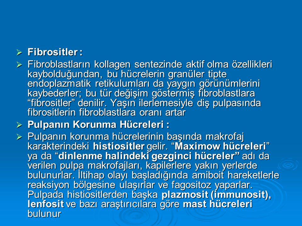 Fibrositler :
