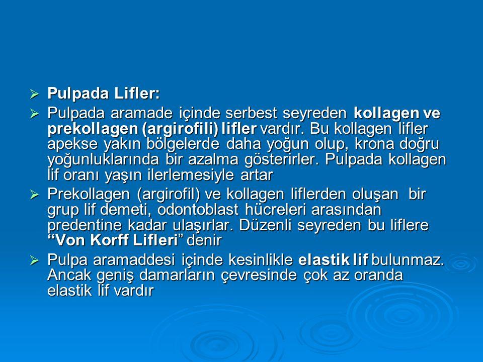 Pulpada Lifler: