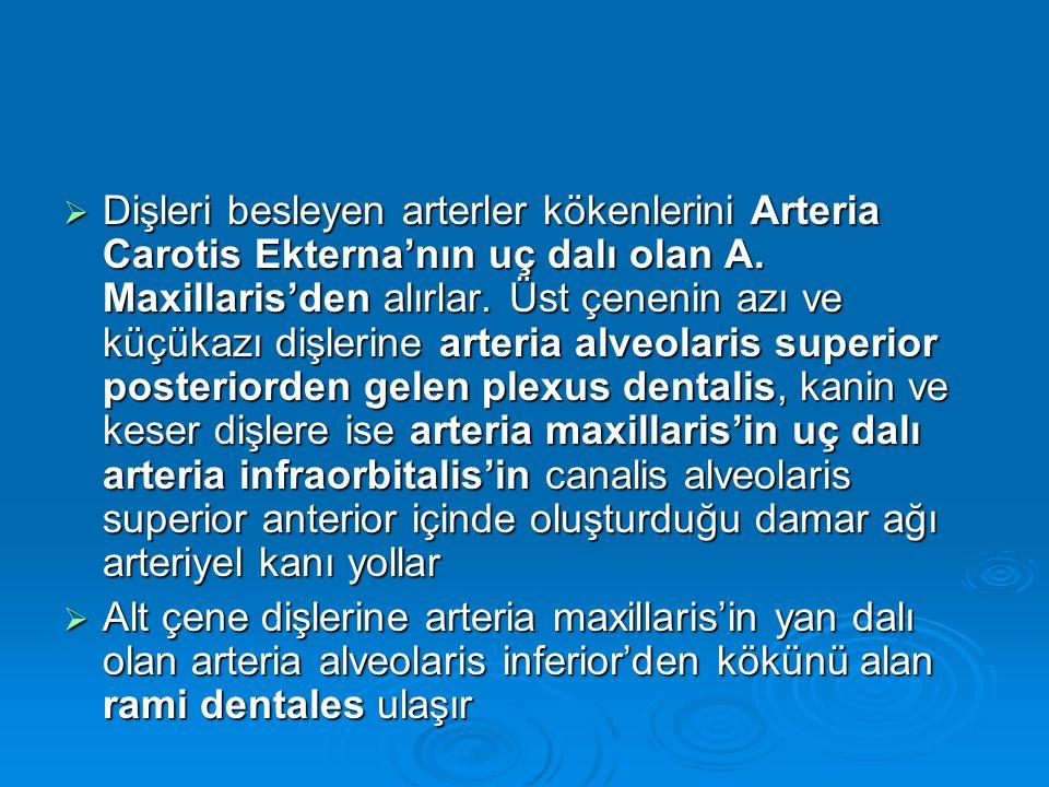 Dişleri besleyen arterler kökenlerini Arteria Carotis Ekterna'nın uç dalı olan A. Maxillaris'den alırlar. Üst çenenin azı ve küçükazı dişlerine arteria alveolaris superior posteriorden gelen plexus dentalis, kanin ve keser dişlere ise arteria maxillaris'in uç dalı arteria infraorbitalis'in canalis alveolaris superior anterior içinde oluşturduğu damar ağı arteriyel kanı yollar
