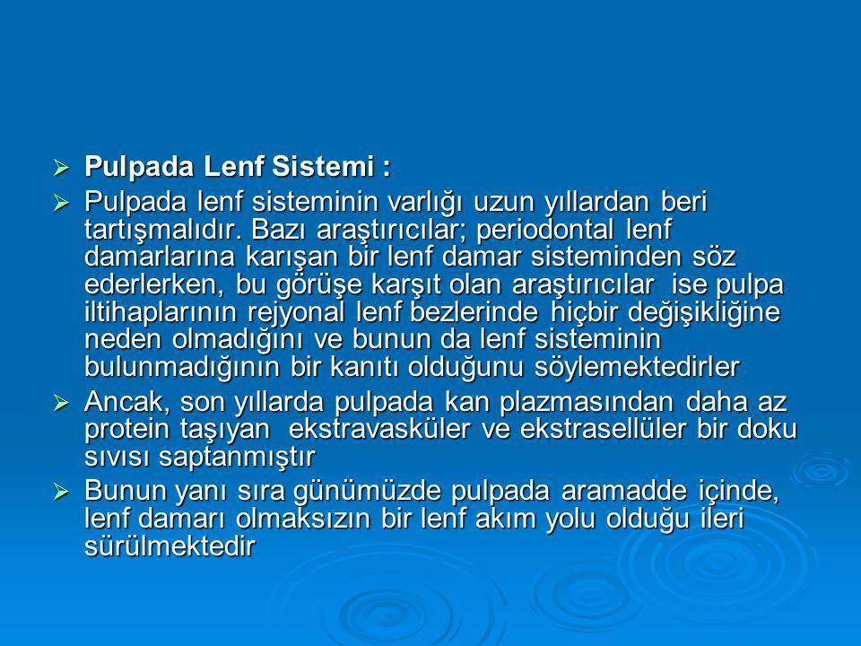 Pulpada Lenf Sistemi :