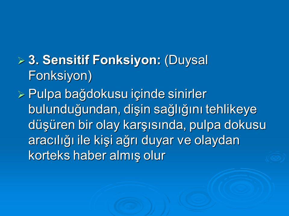 3. Sensitif Fonksiyon: (Duysal Fonksiyon)