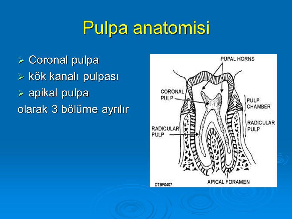Pulpa anatomisi Coronal pulpa kök kanalı pulpası apikal pulpa