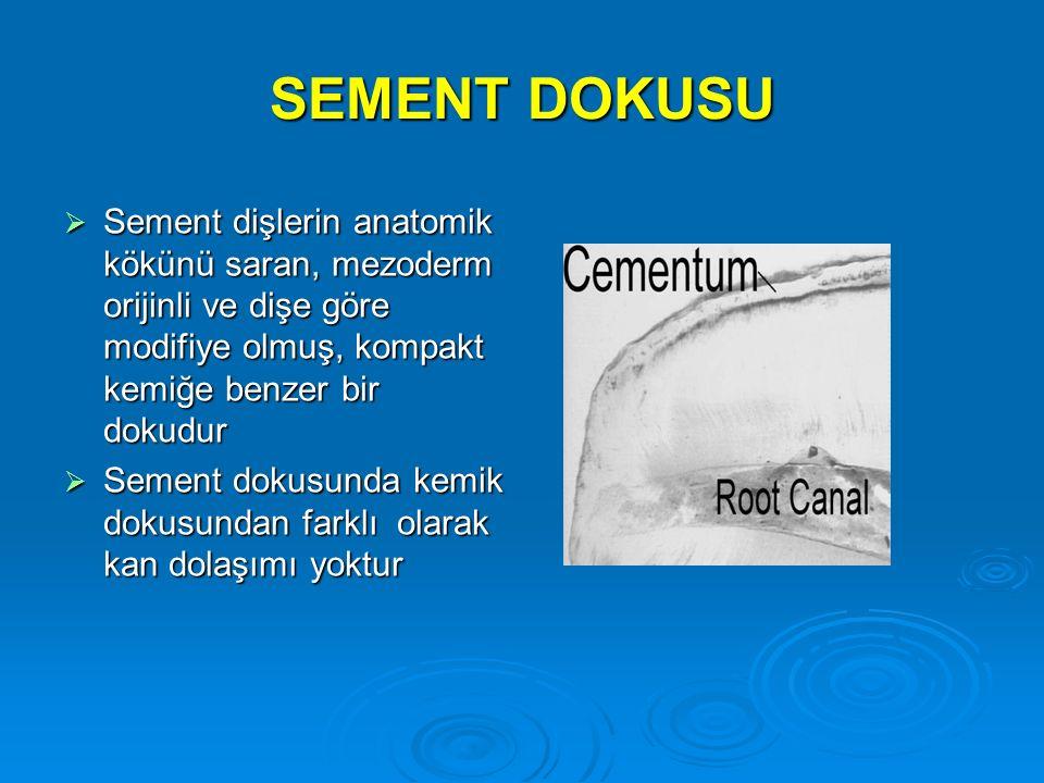 SEMENT DOKUSU Sement dişlerin anatomik kökünü saran, mezoderm orijinli ve dişe göre modifiye olmuş, kompakt kemiğe benzer bir dokudur.