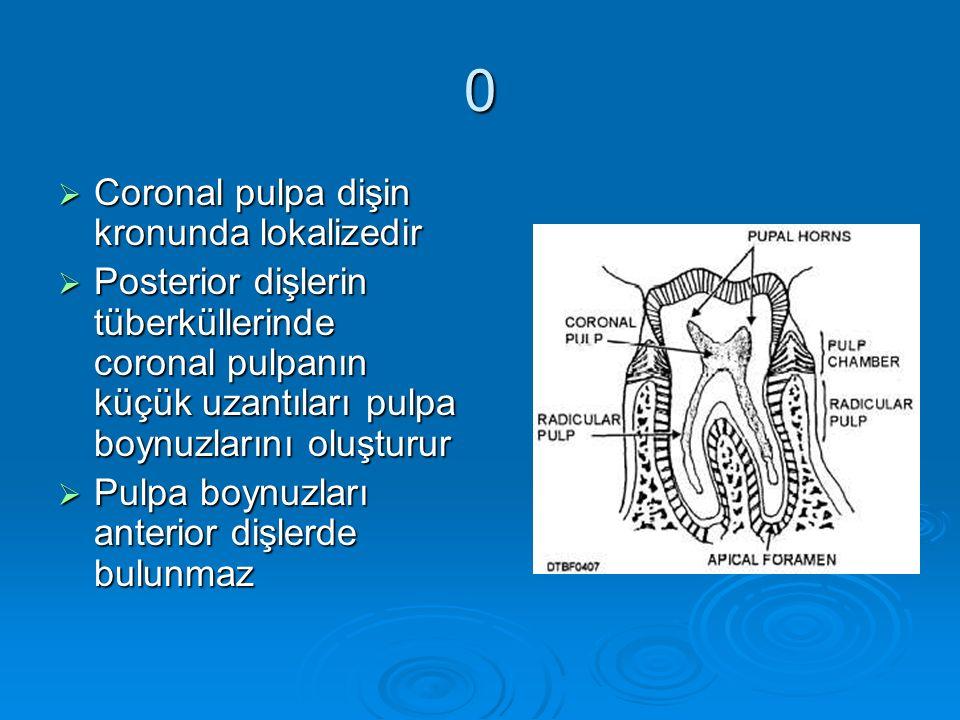 Coronal pulpa dişin kronunda lokalizedir Posterior dişlerin tüberküllerinde coronal pulpanın küçük uzantıları pulpa boynuzlarını oluşturur.