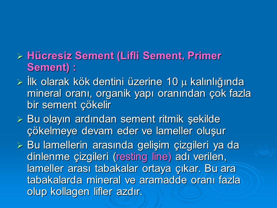 Hücresiz Sement (Lifli Sement, Primer Sement) :