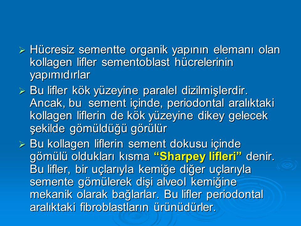Hücresiz sementte organik yapının elemanı olan kollagen lifler sementoblast hücrelerinin yapımıdırlar