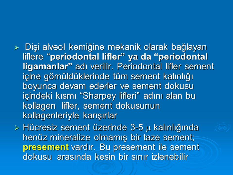 Dişi alveol kemiğine mekanik olarak bağlayan liflere periodontal lifler ya da periodontal ligamanlar adı verilir. Periodontal lifler sement içine gömüldüklerinde tüm sement kalınlığı boyunca devam ederler ve sement dokusu içindeki kısmı Sharpey lifleri adını alan bu kollagen lifler, sement dokusunun kollagenleriyle karışırlar