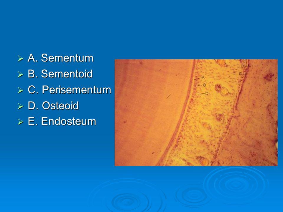 A. Sementum B. Sementoid C. Perisementum D. Osteoid E. Endosteum