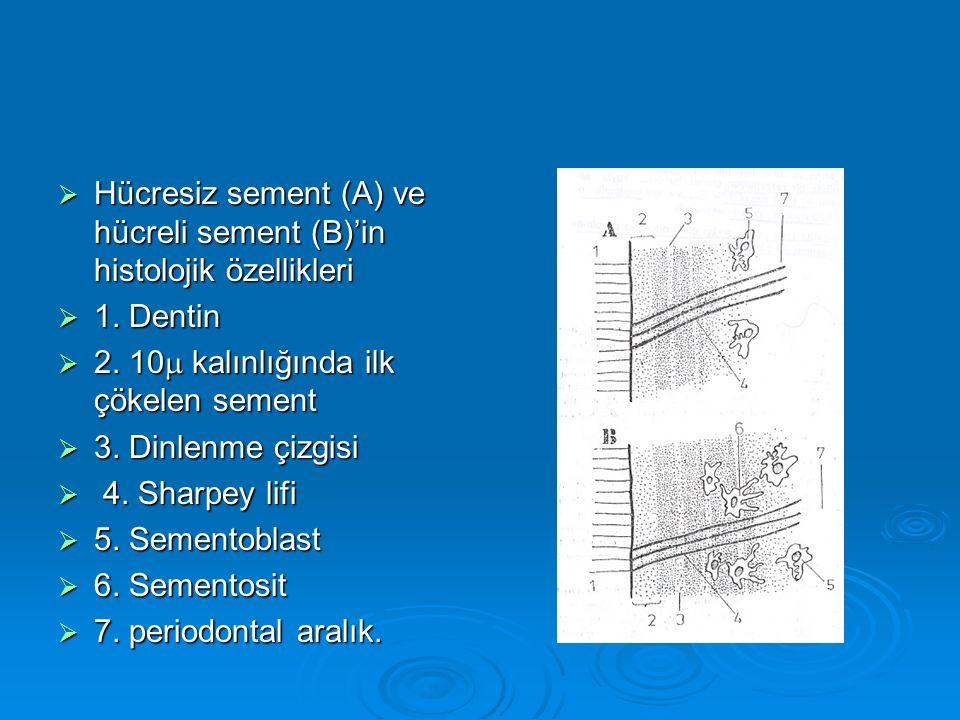 Hücresiz sement (A) ve hücreli sement (B)'in histolojik özellikleri
