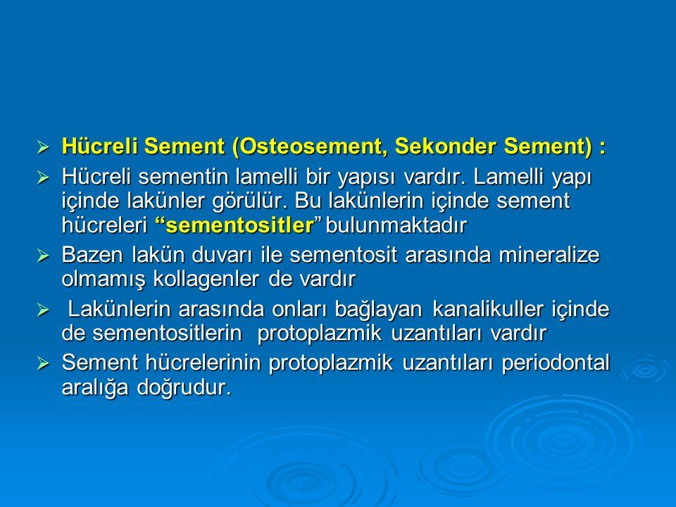 Hücreli Sement (Osteosement, Sekonder Sement) :