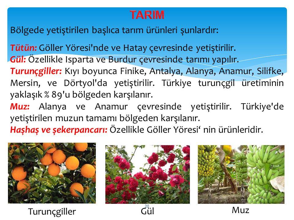 TARIM Bölgede yetiştirilen başlıca tarım ürünleri şunlardır: