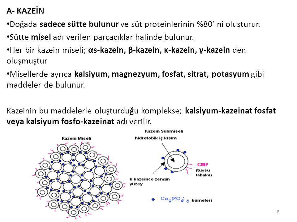 A- KAZEİN Doğada sadece sütte bulunur ve süt proteinlerinin %80' ni oluşturur. Sütte misel adı verilen parçacıklar halinde bulunur.