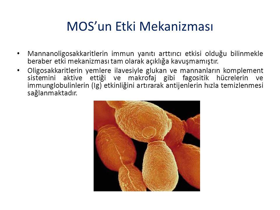 MOS'un Etki Mekanizması