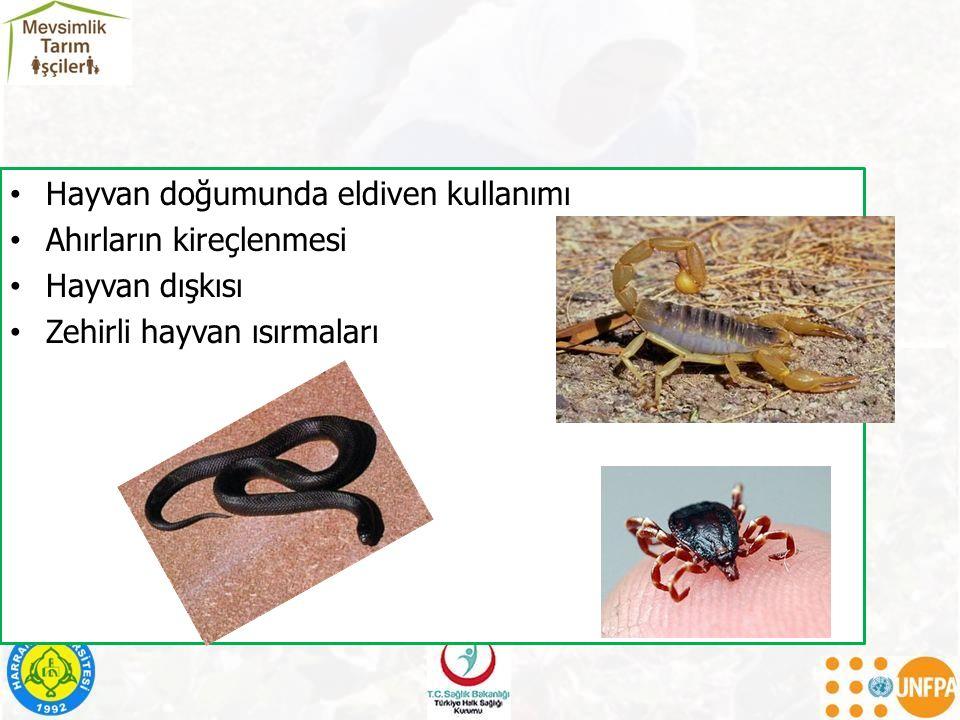 Hayvan doğumunda eldiven kullanımı